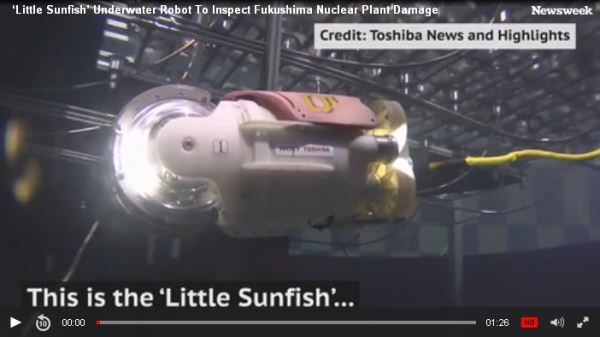 This-is-the-'Little-Sunfish'_video