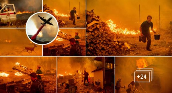 CALIFORNIA WILDFIRES-- DESPERATE SCENES